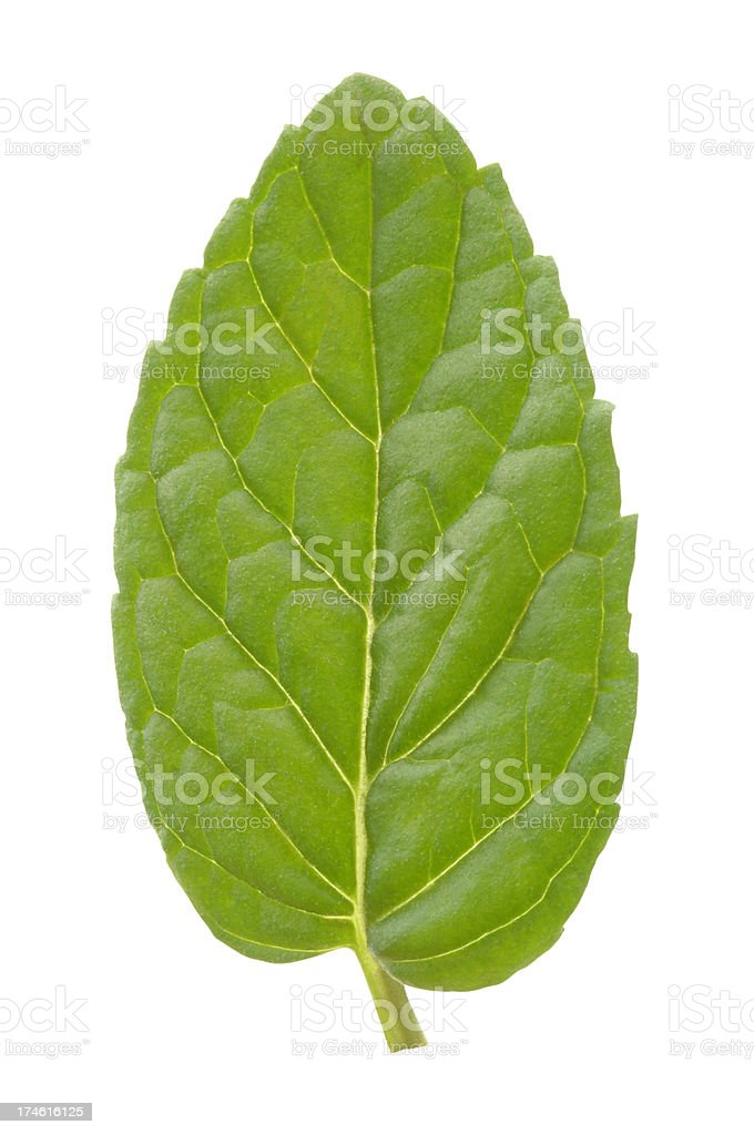 Mint Leaf with Path royalty-free stock photo