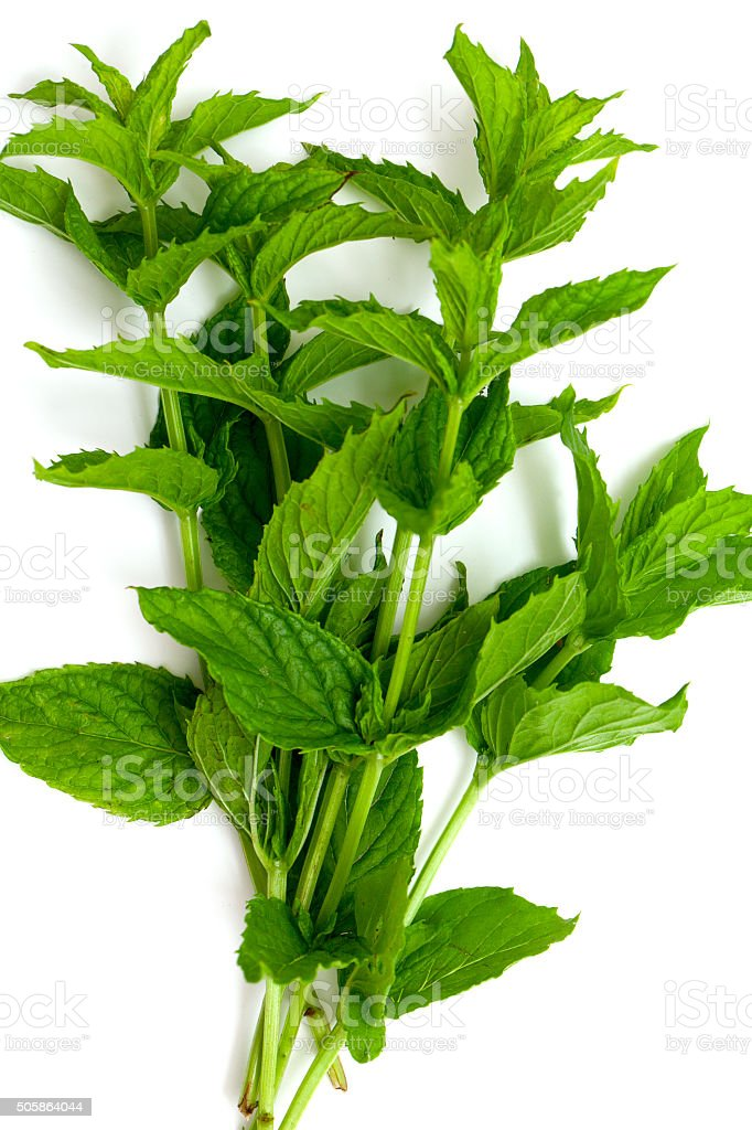 mint leafs isolated on white stock photo