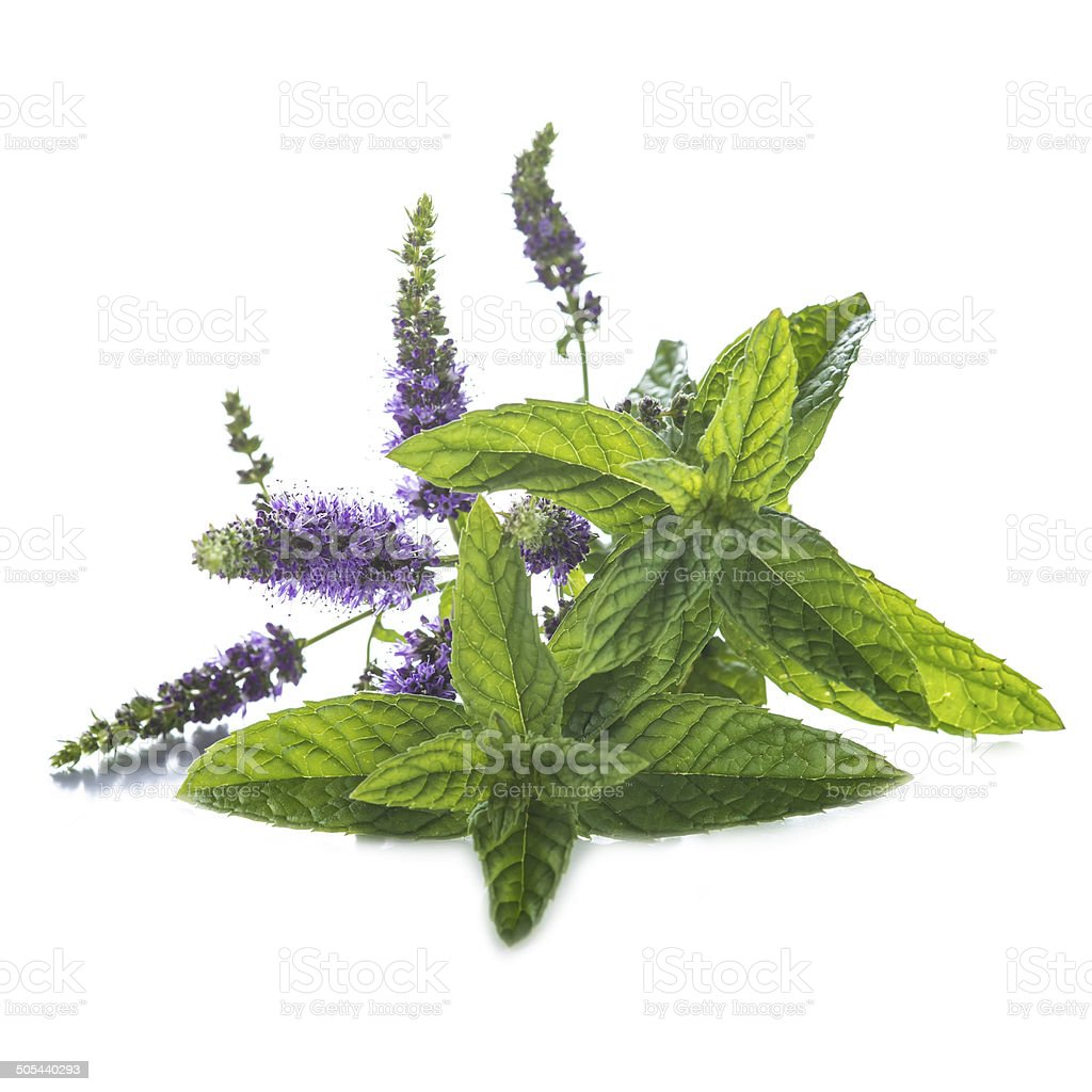 Mint leaves and flowers isolated on white background stock photo