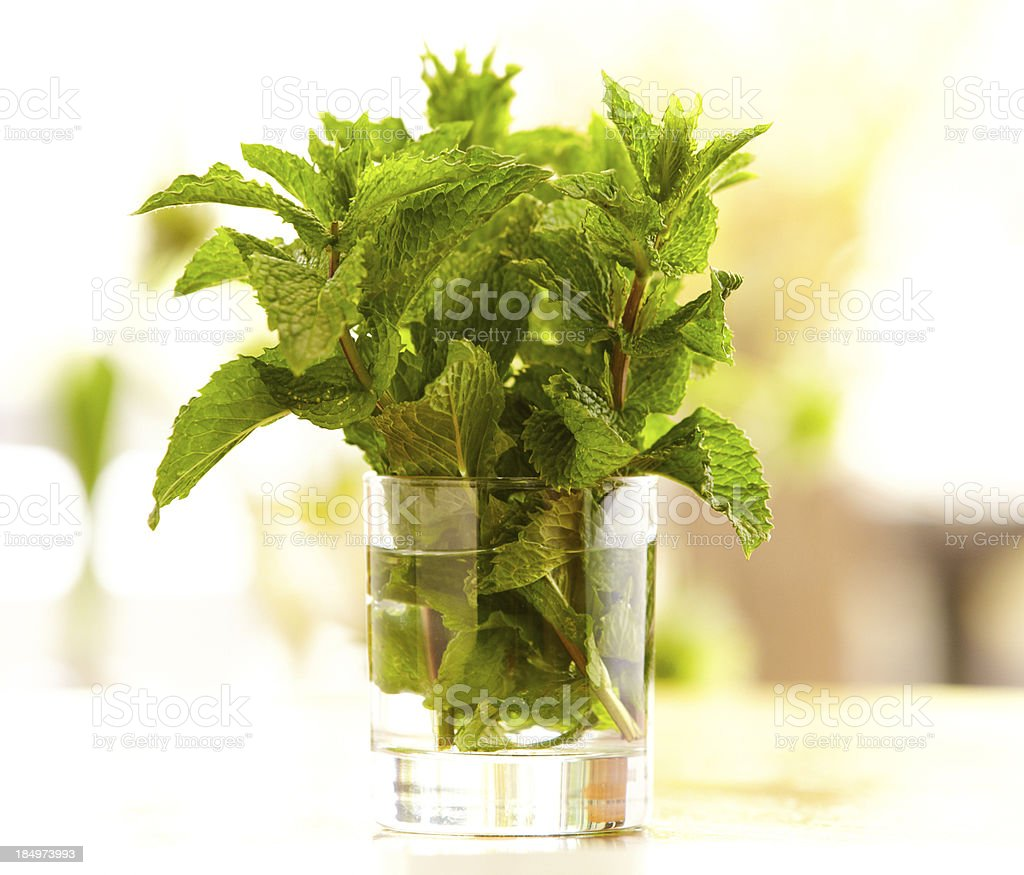 Mint leaves in a glass with water outdoors royalty-free stock photo