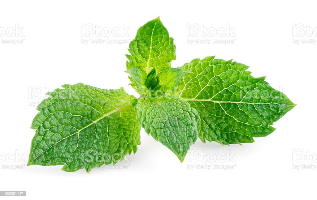 Mint leaves isolated on white background stock photo