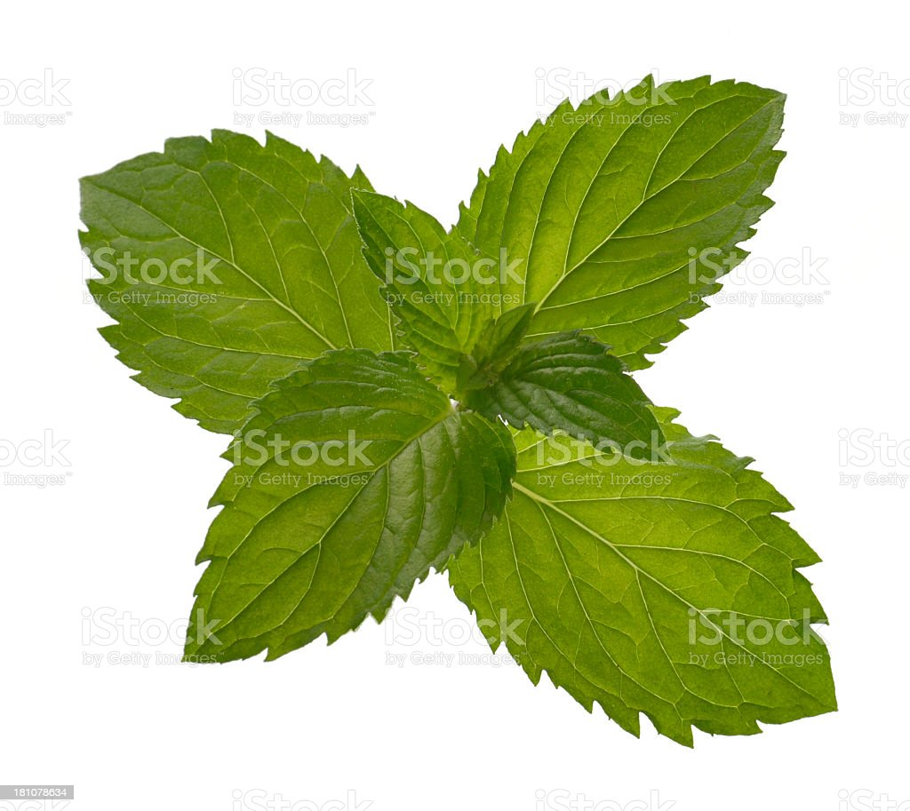 Mint Leaves on white background royalty-free stock photo