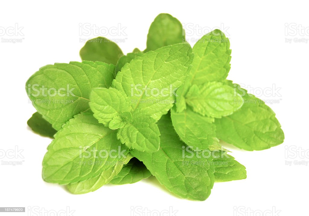 Mint leaves (Mentha) royalty-free stock photo