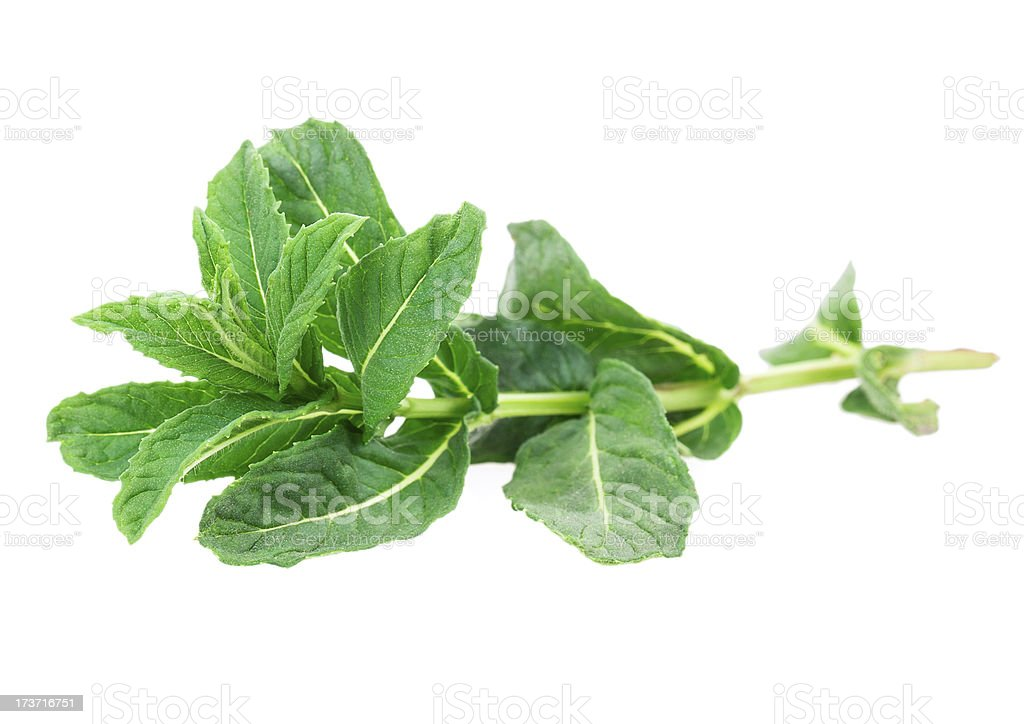 mint, lemon balm royalty-free stock photo