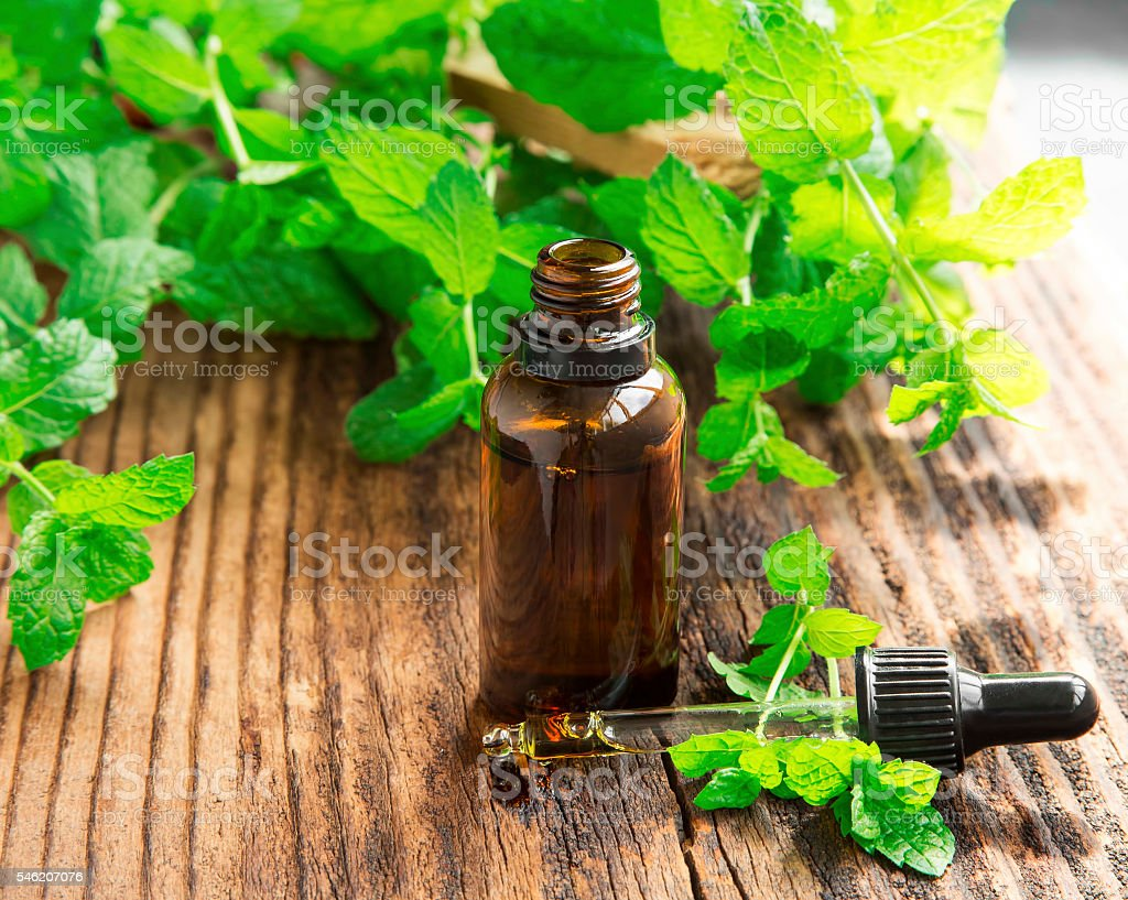 Mint oil/essence in black bottle with mint leaves stock photo