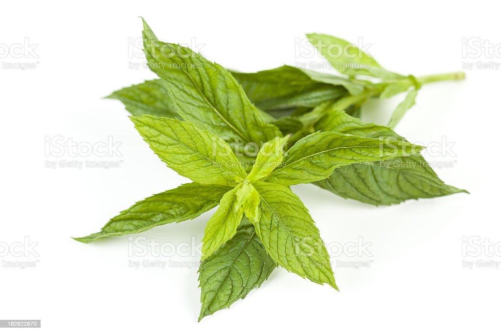 Mint on white stock photo