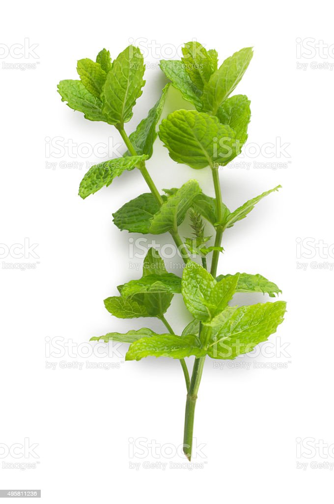 Mint stock photo
