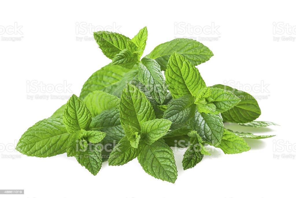 mint plants stock photo