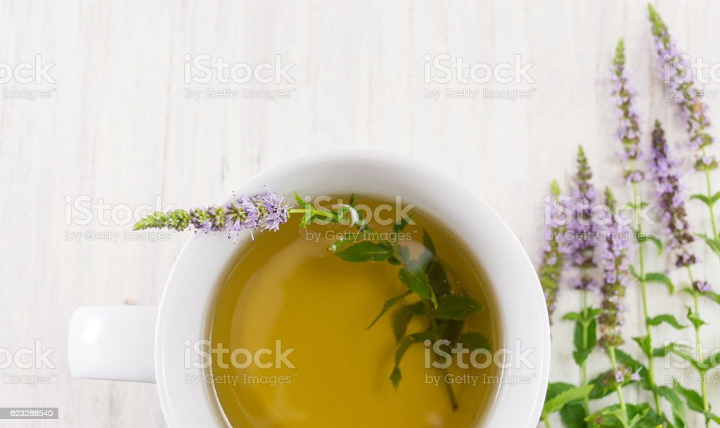Mint tea with herbs in a teacup stock photo