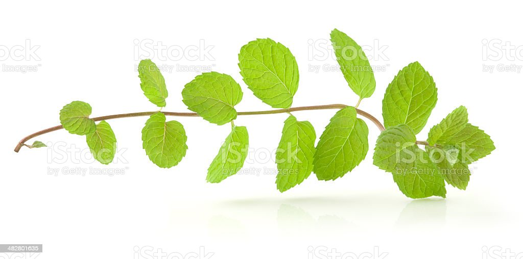 Mint Vine with Path royalty-free stock photo