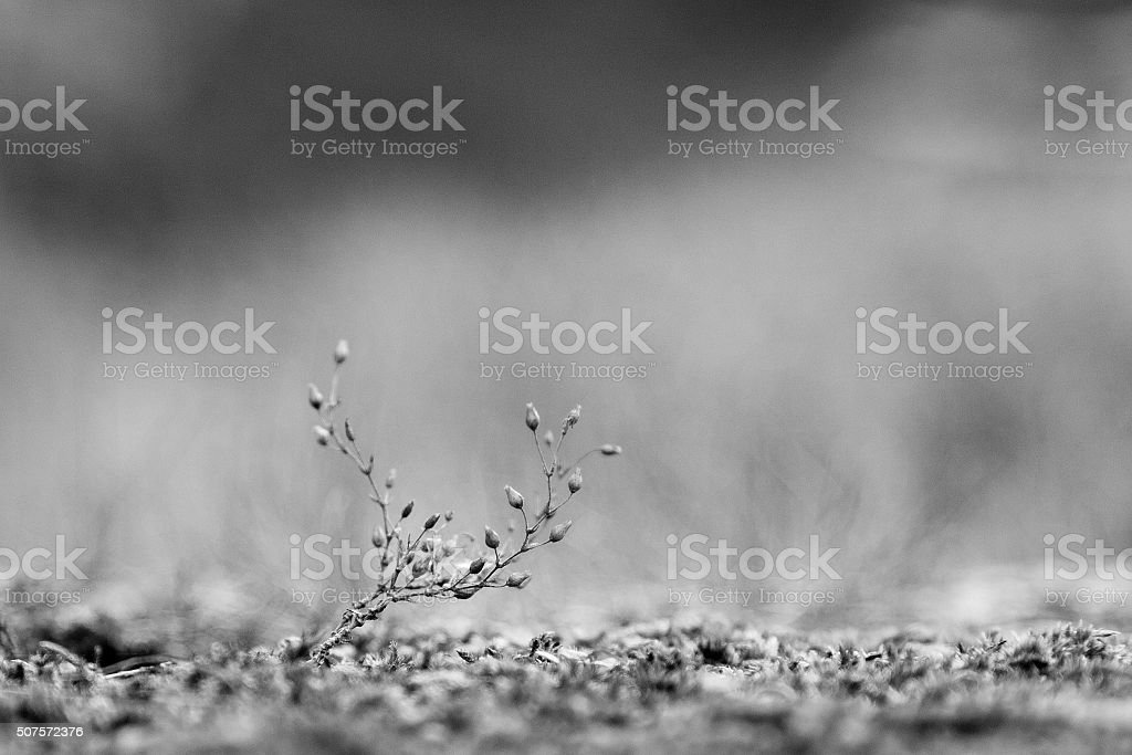 Minuscule royalty-free stock photo