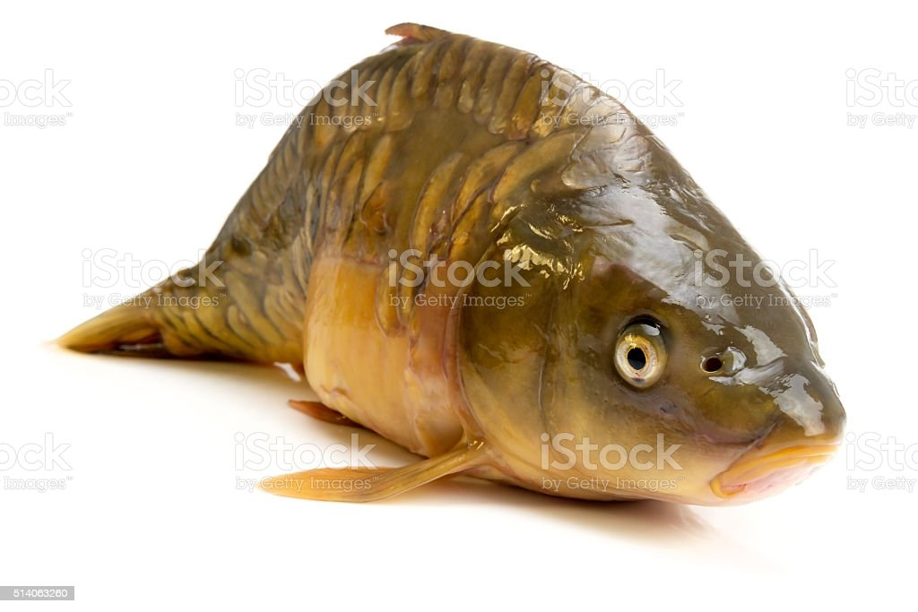 mirror carp - weighing 3 pounds of fish stock photo