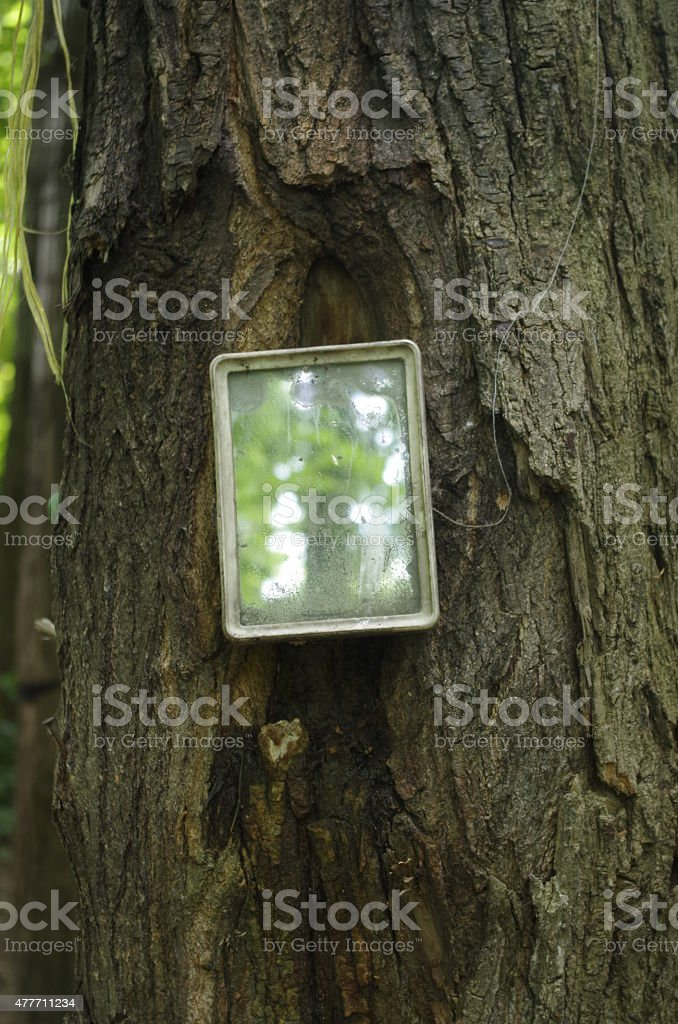 Mirror in a forest stock photo