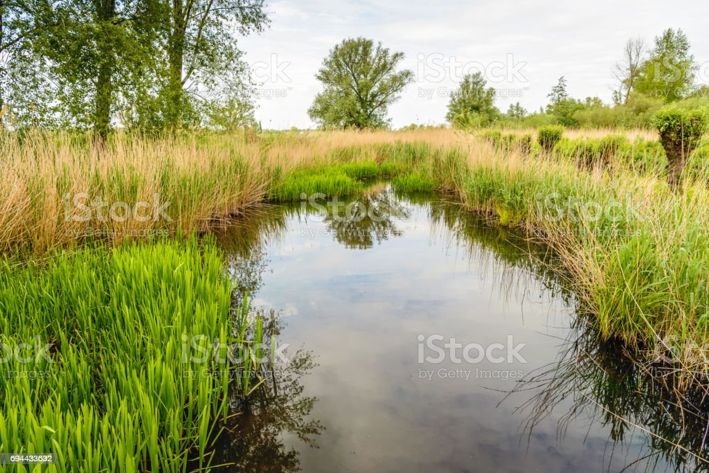 Mirror smooth reflecting water surface of a small creek stock photo