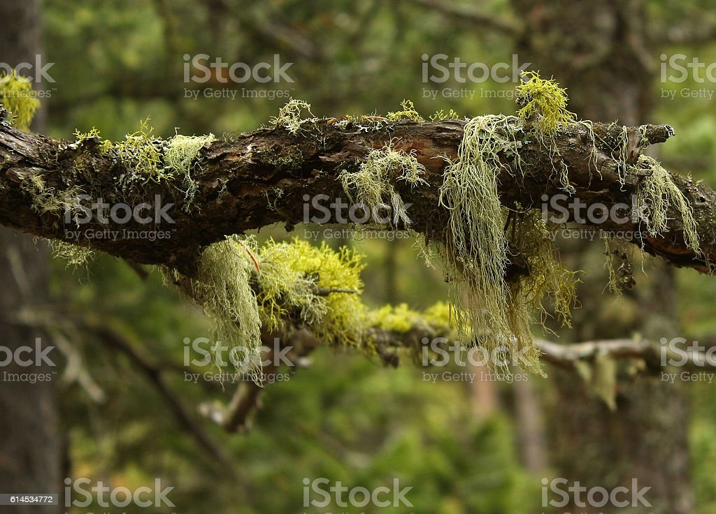 Miscellaneous Lichens and Mosses stock photo