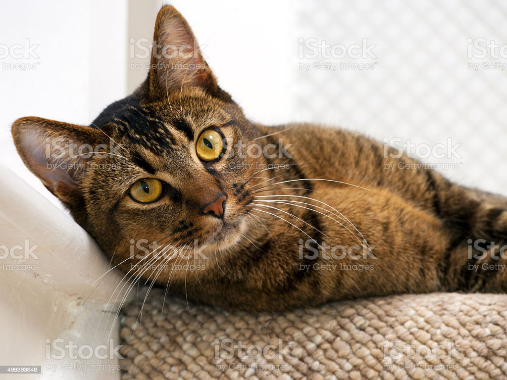Mischievous young cat stock photo