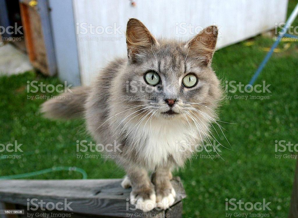 Miss Kitty stock photo