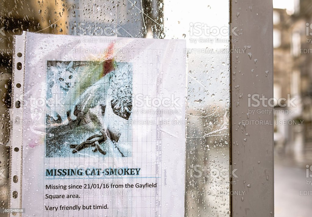 Missing Cat Poster stock photo