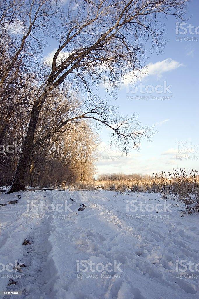 Mississippi River basin wetlands area stock photo