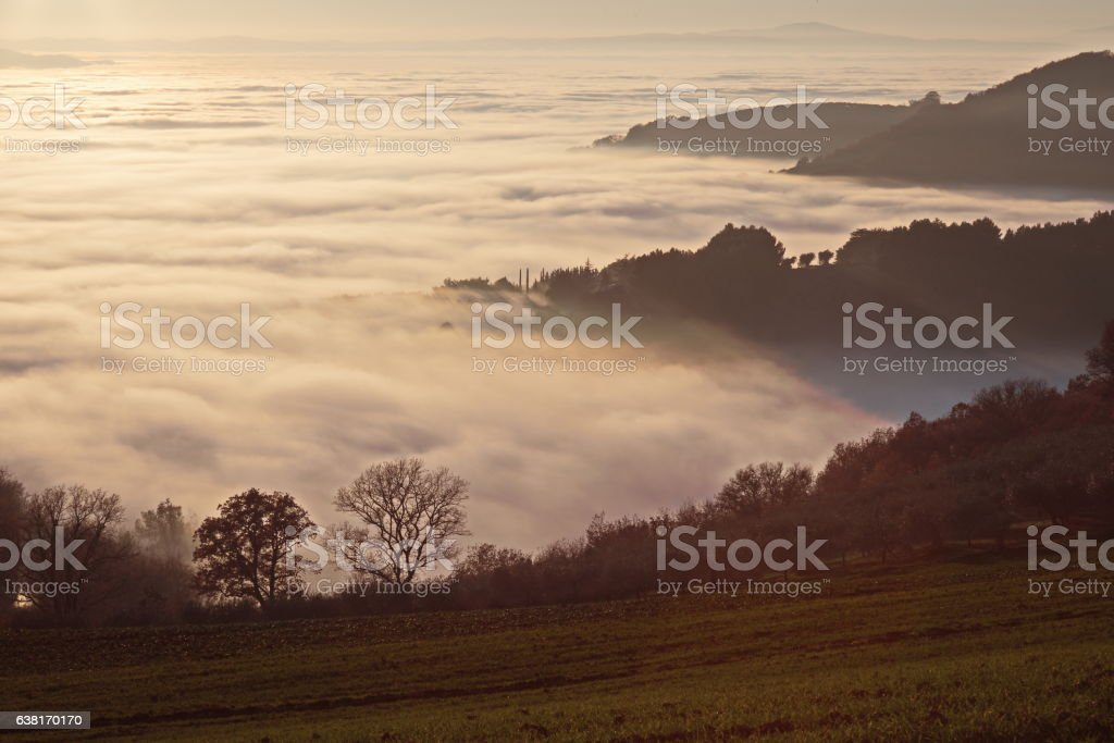 Mist and trees stock photo
