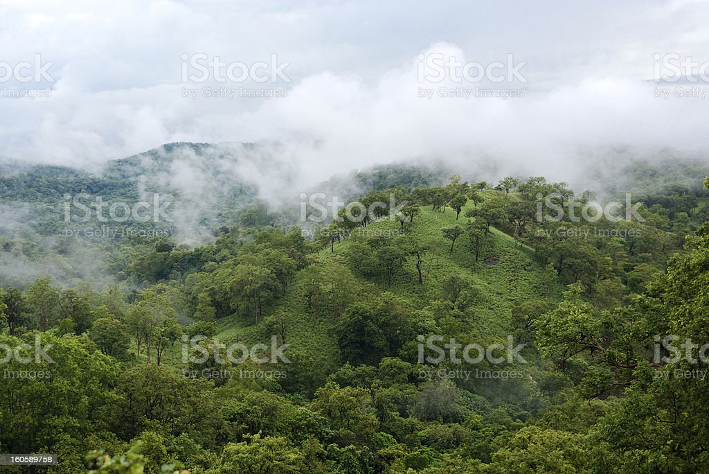 Mist covered Mountains with wild forest royalty-free stock photo