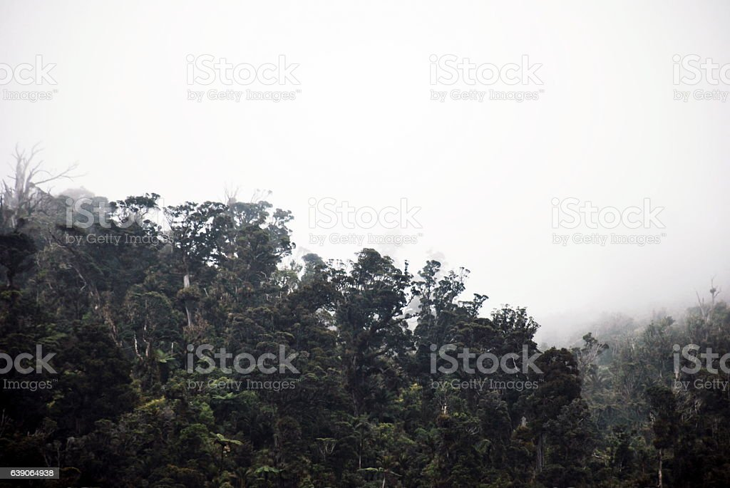 Mist Falls on Native New Zealand Forest stock photo