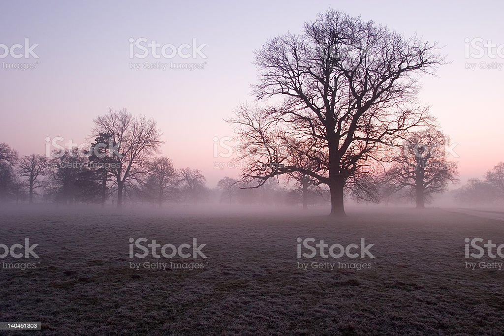 Mist in early morning park stock photo