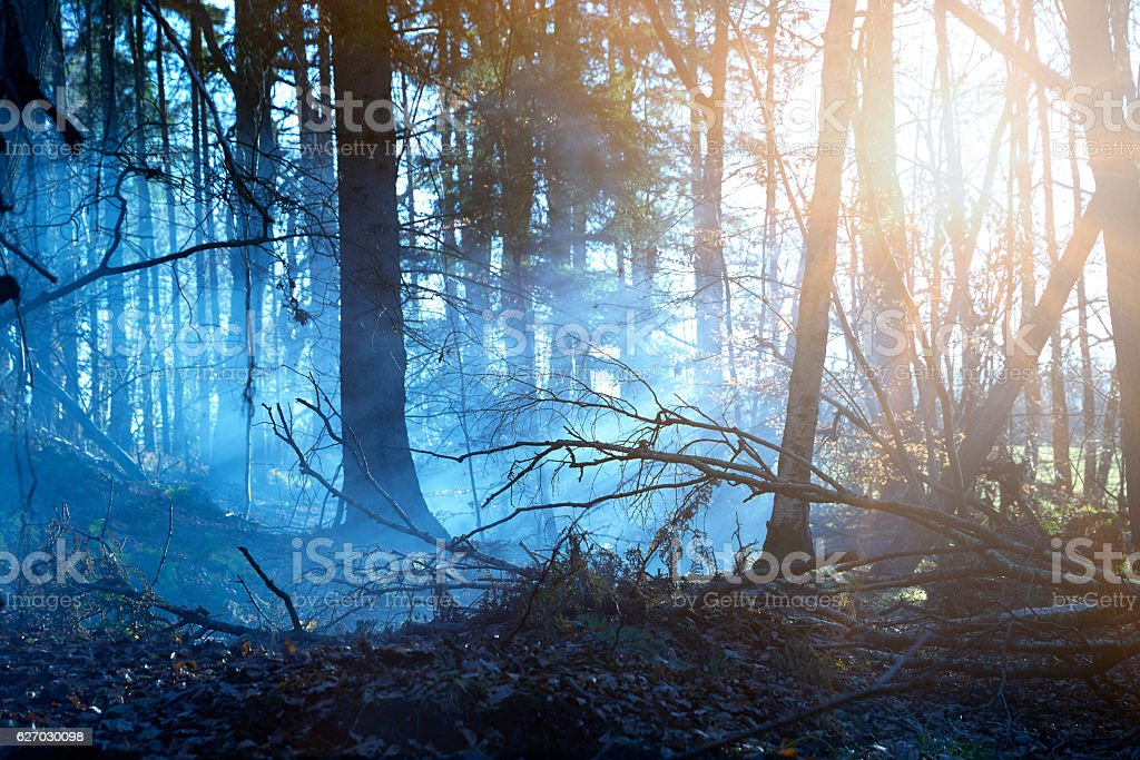 Mist in fairy forest stock photo