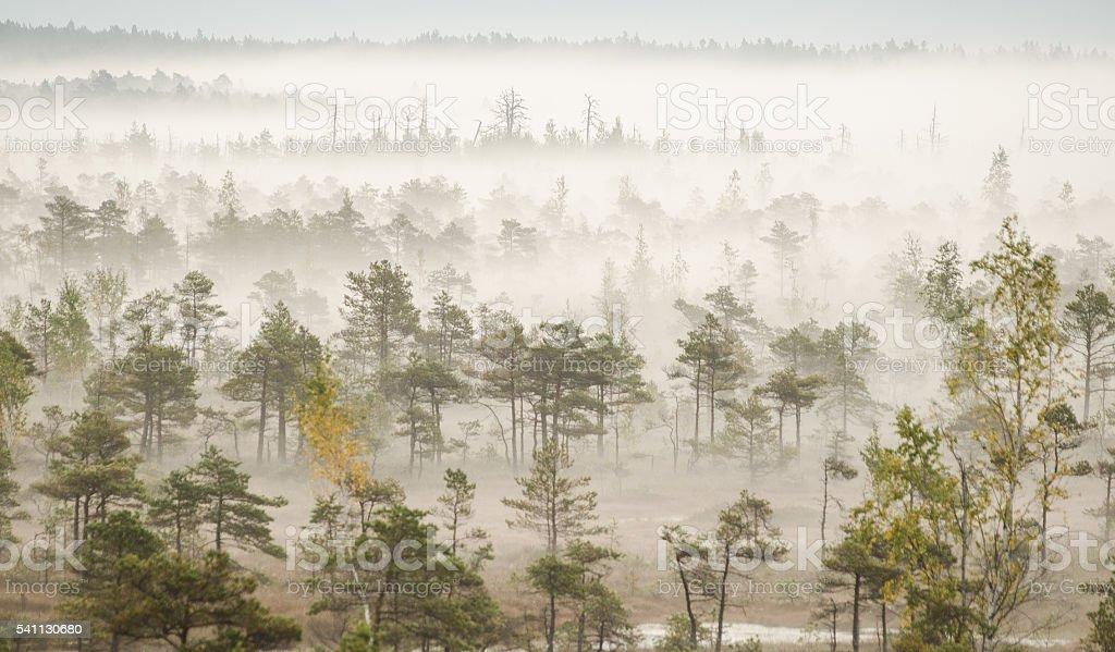 Mist in swamp stock photo