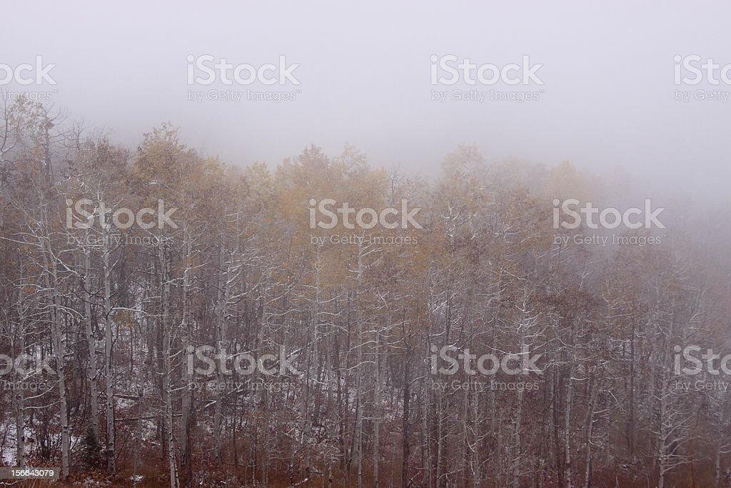 Mist in the Forest royalty-free stock photo