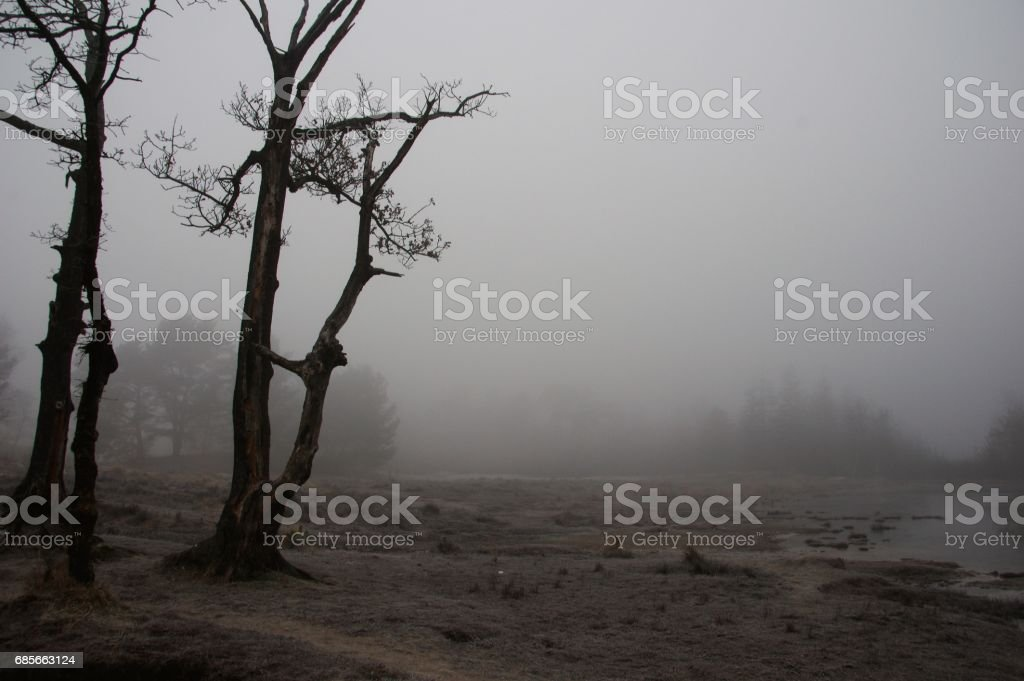 Mist in the wetland stock photo