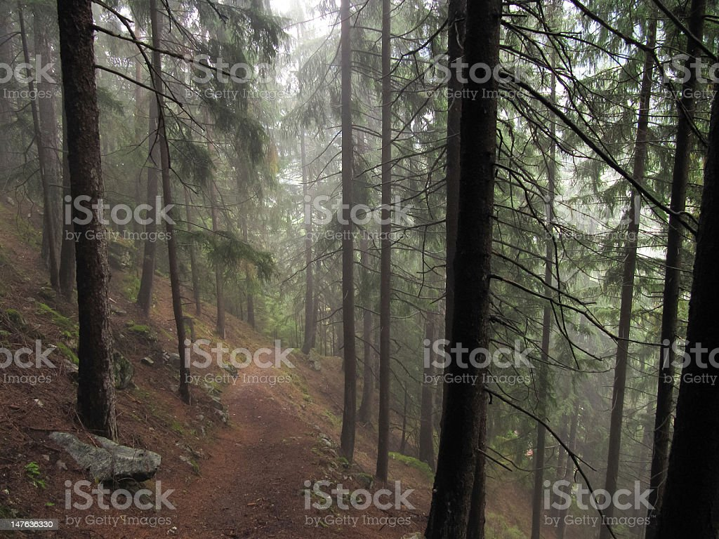 Mist in the woods stock photo