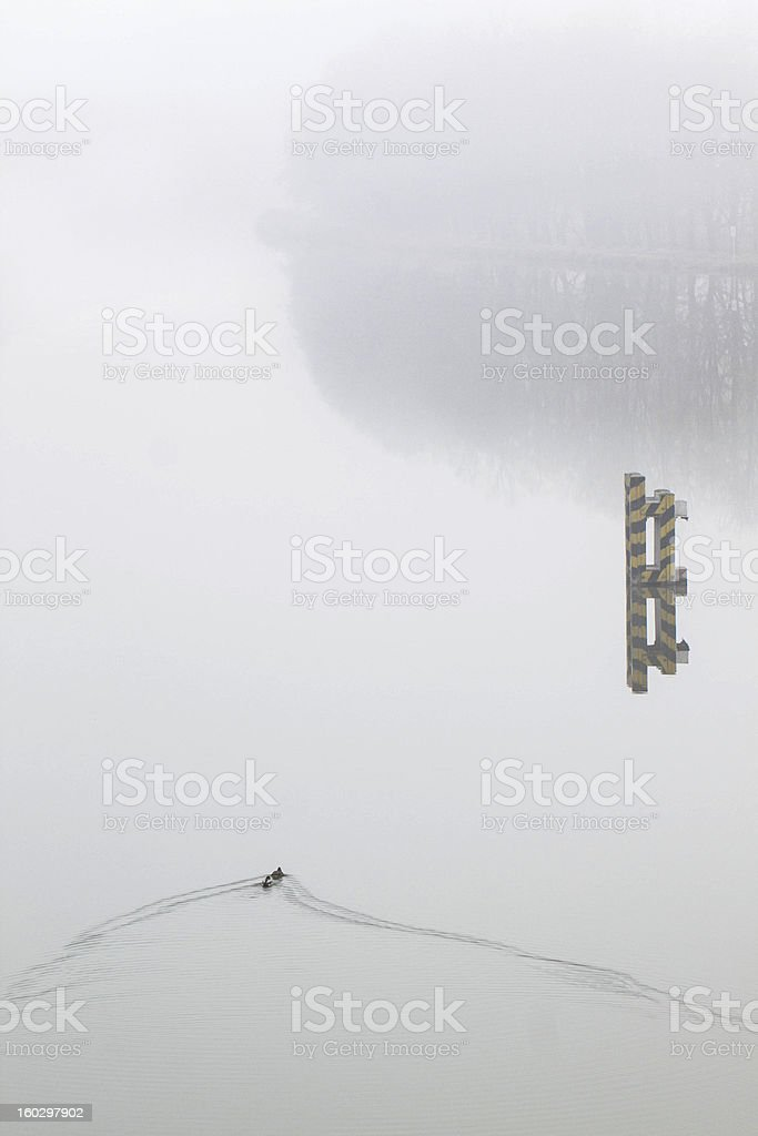 Mist on a lake royalty-free stock photo