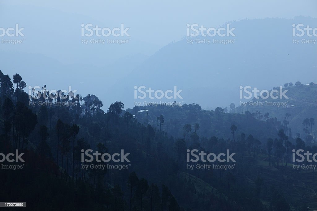 Mist Pine Forest royalty-free stock photo