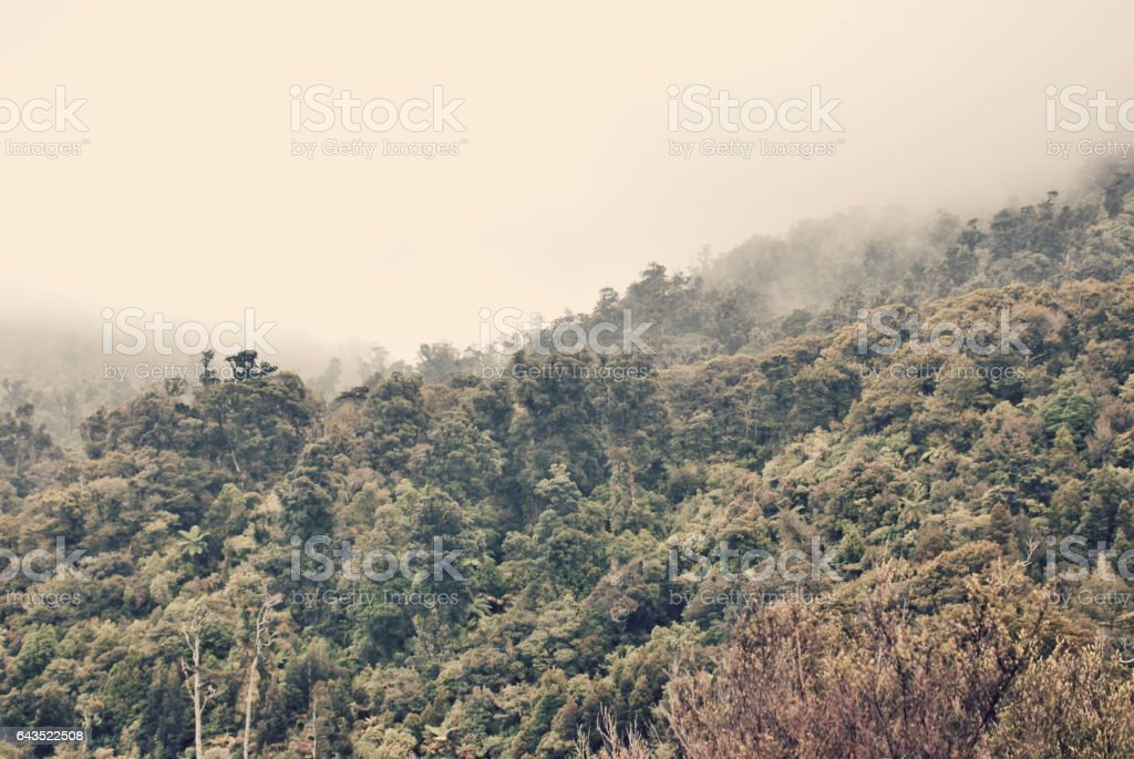 Mist Rising on Native New Zealand Forest stock photo