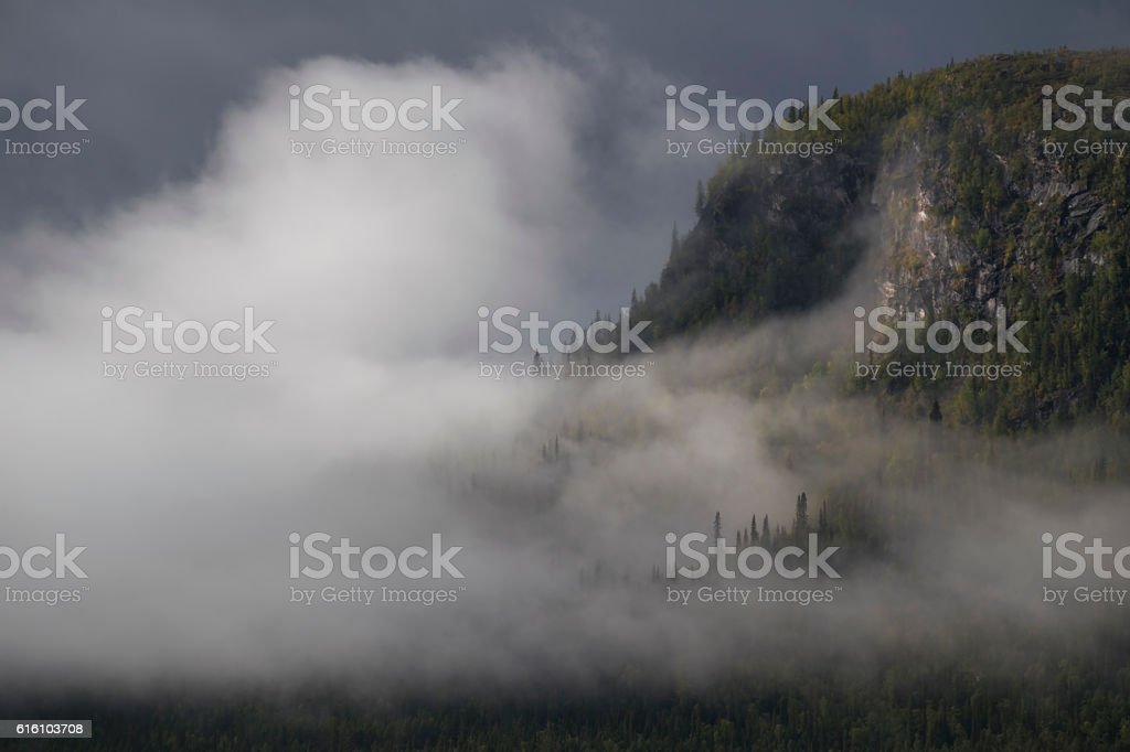 Mist shrouded the pine forest, sun lights up mountain slope stock photo
