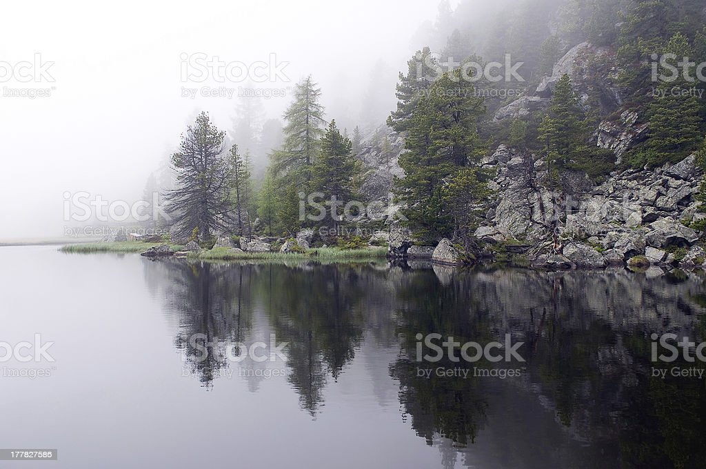 Misterious, foggy lake with pines stock photo