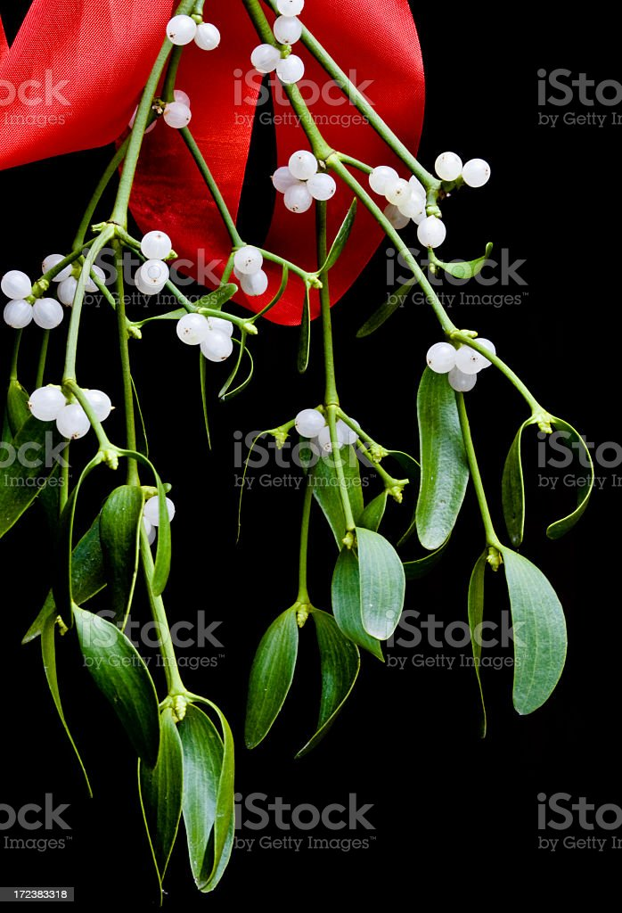 Mistletoe and Red Ribbon royalty-free stock photo