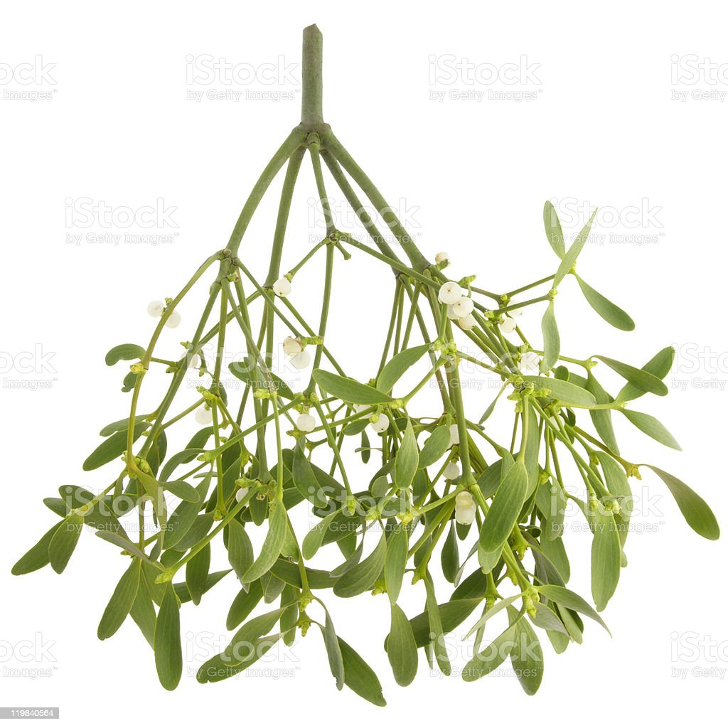 Mistletoe branch stock photo