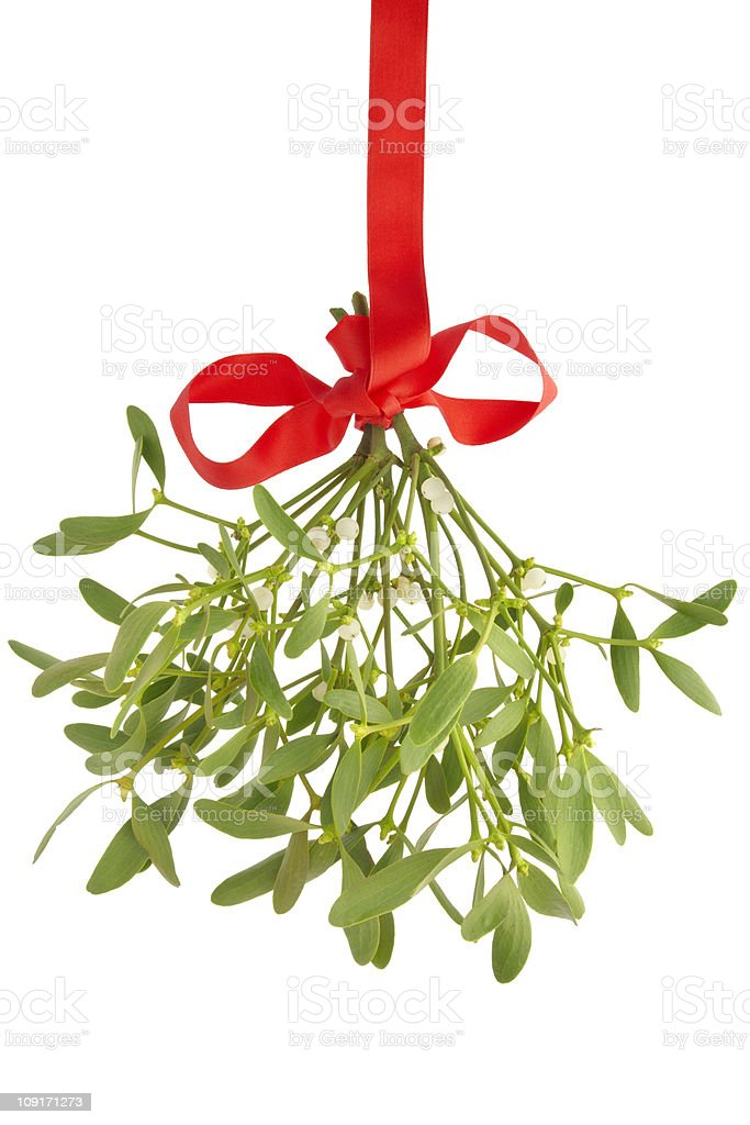 Mistletoe bunch isolated royalty-free stock photo