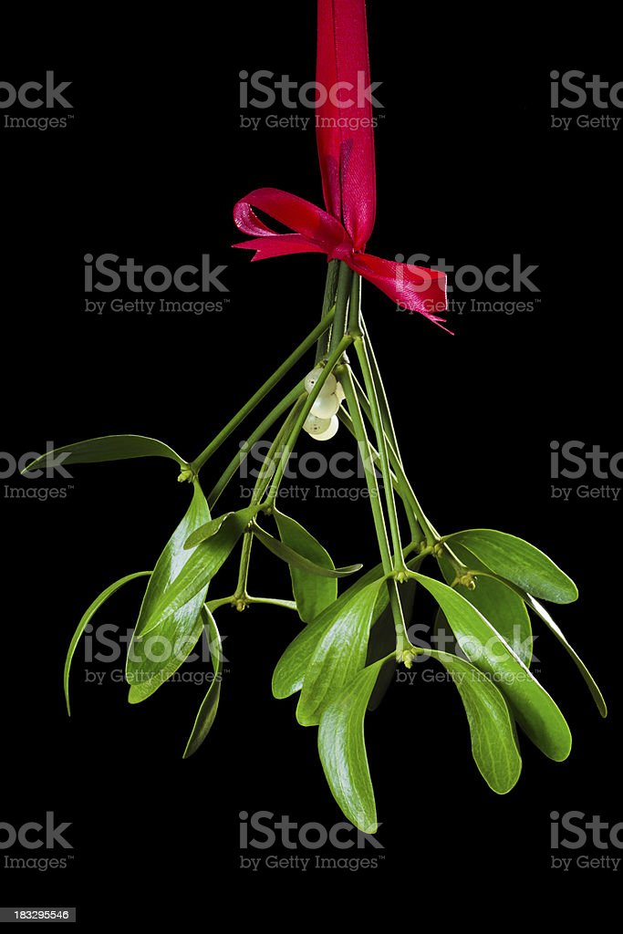 mistletoe bunch on the black stock photo