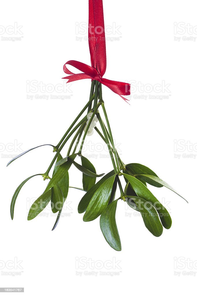 mistletoe bunch stock photo