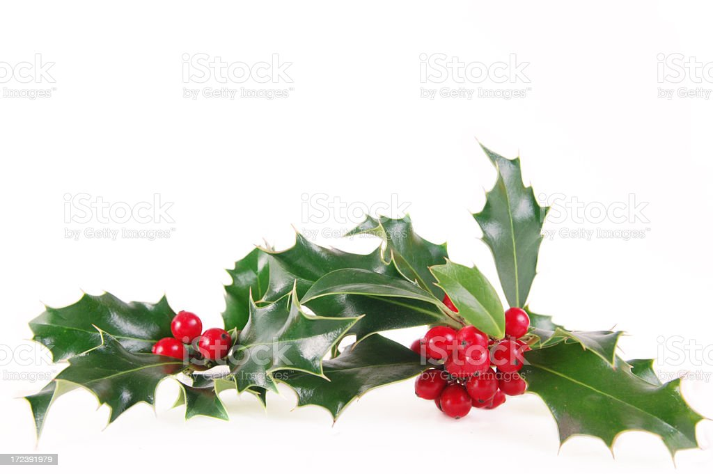 Mistletoe during Christmas on white background stock photo
