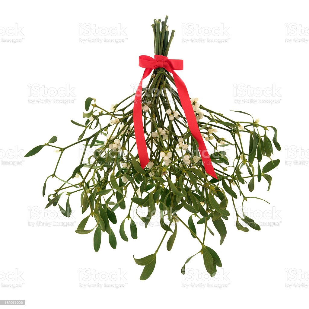 Mistletoe hanging up tied with a red ribbon in a bow royalty-free stock photo