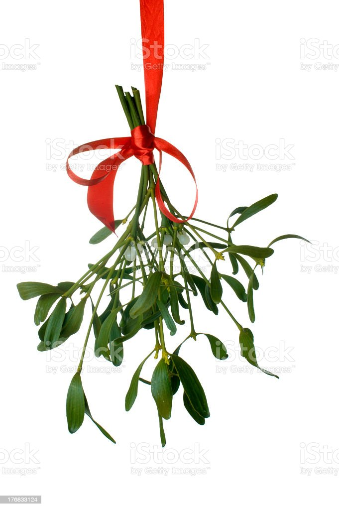 Mistletoe hanging with a red ribbon isolated on white  royalty-free stock photo