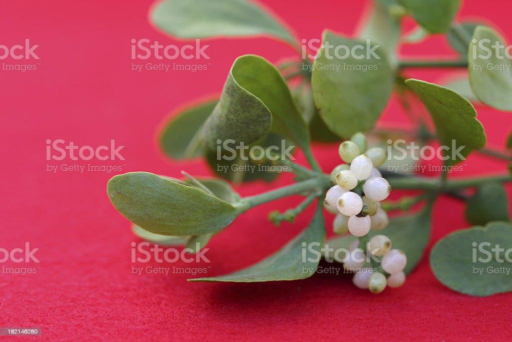 Mistletoe royalty-free stock photo