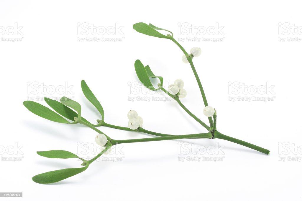Mistletoe sprig (Viscum album) with berries and leafs stock photo