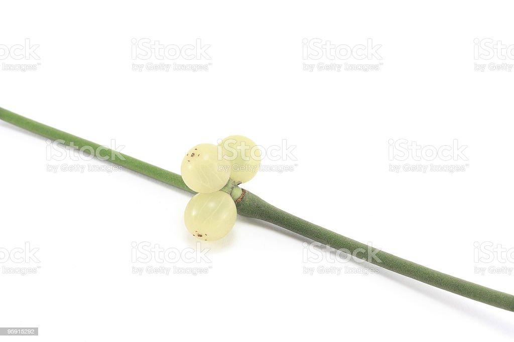 Mistletoe sprig (Viscum album) with berries royalty-free stock photo