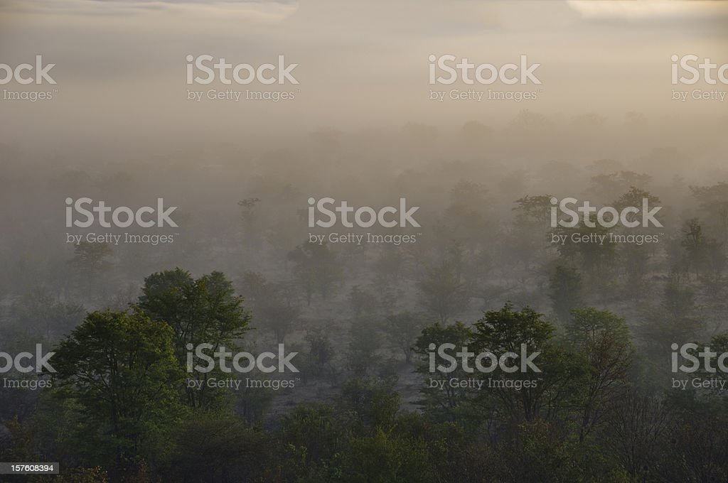 Misty African Bush stock photo