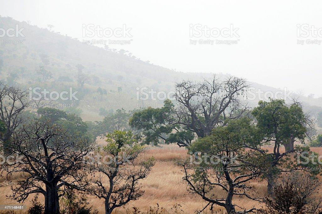 misty african landscape stock photo